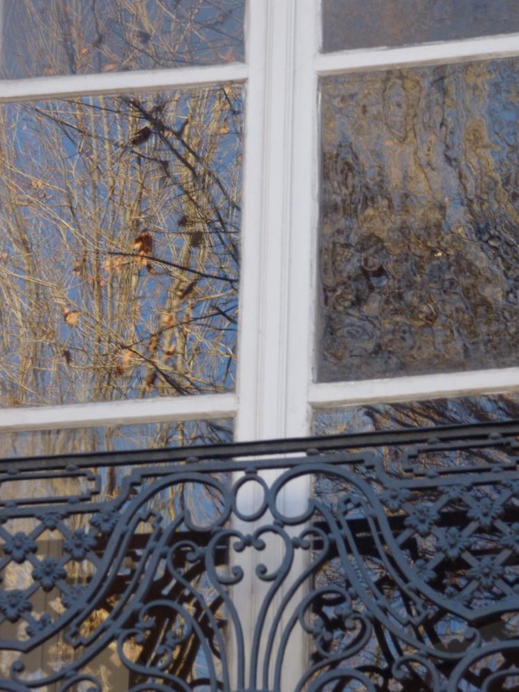 Frémissements sur une vitre. De jeunes arbres émerveillent cette ville ancienne !